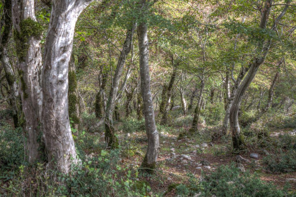 Forest surrounding Motsameta monastery
