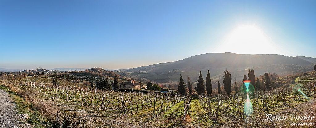 Vineyards in Tuscany