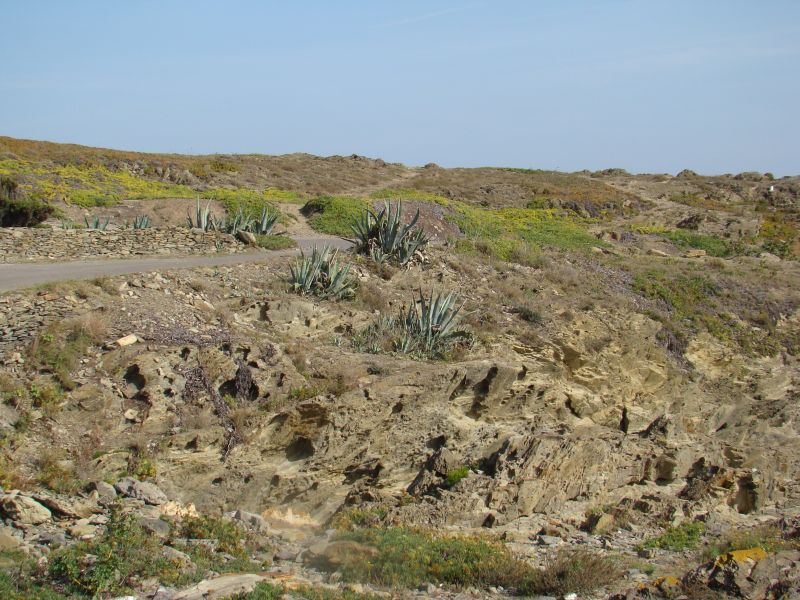 Cactuses on cliffs