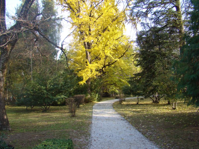 Autumn in Tsinandali