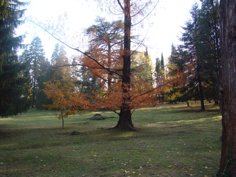 Alexander Chavchavadze park