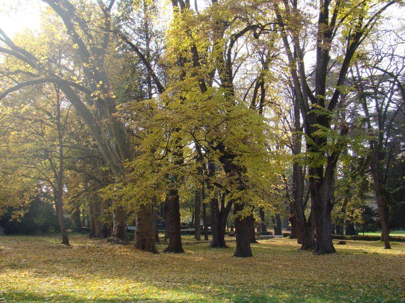Trees at Tsinandali museum park