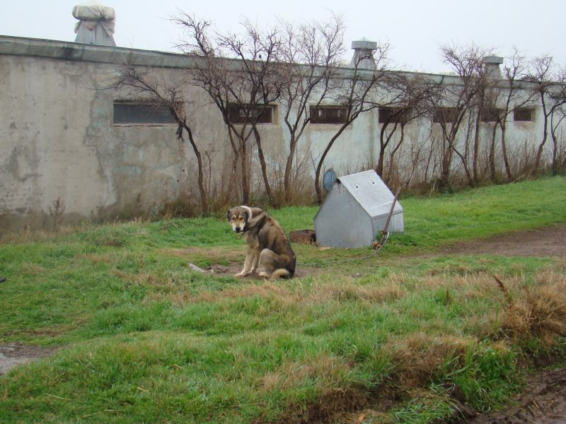 Housedog