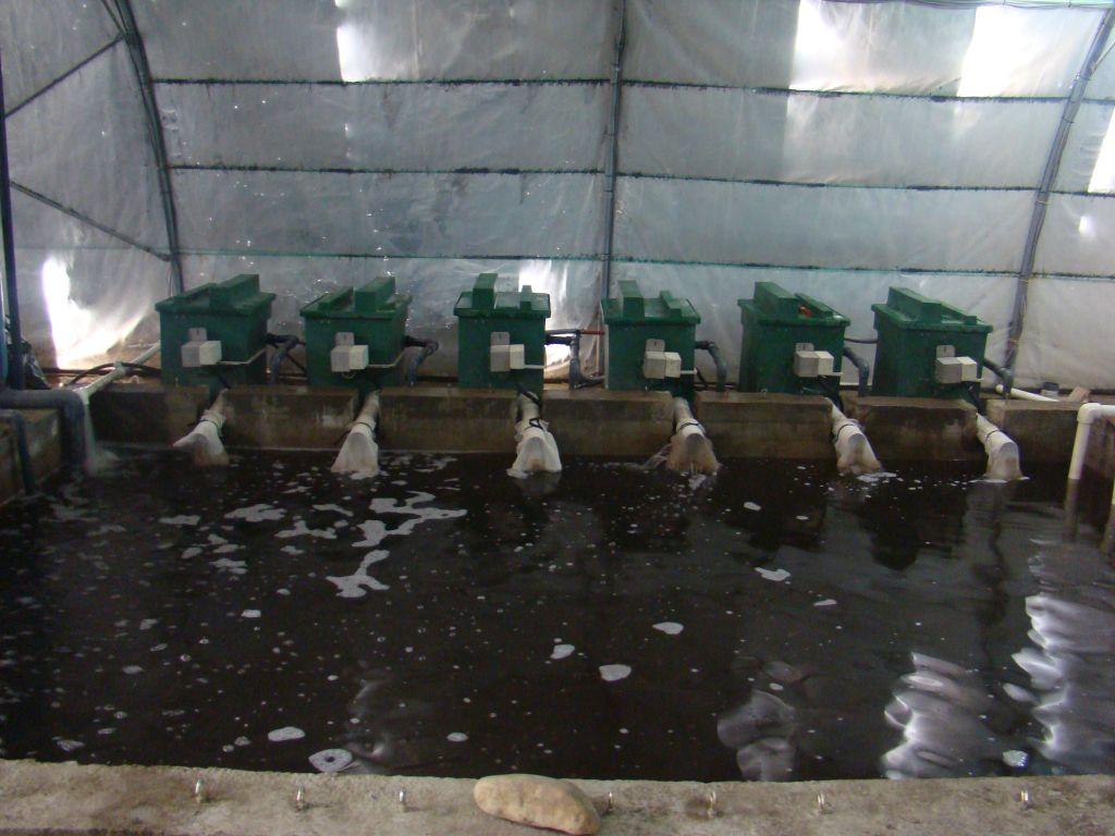 Fish Farm in Sartichala