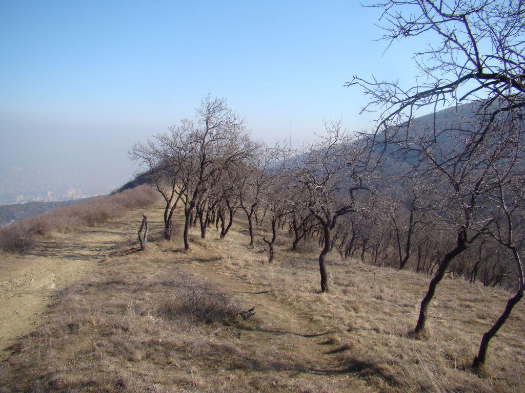 Tbilisi Hiking Trails