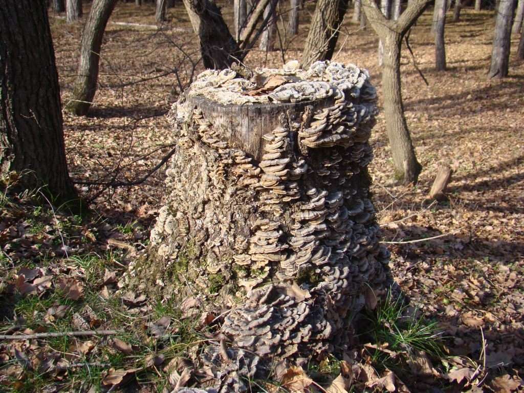 A Stump with fungi's