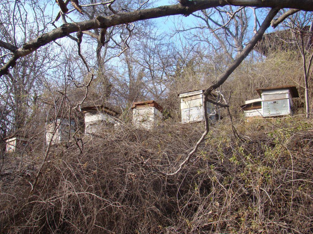 Beehives in Tskneti