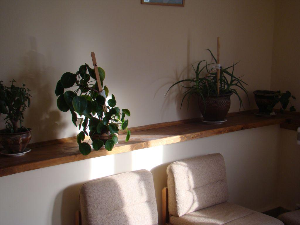 House plants at hotel Shamo