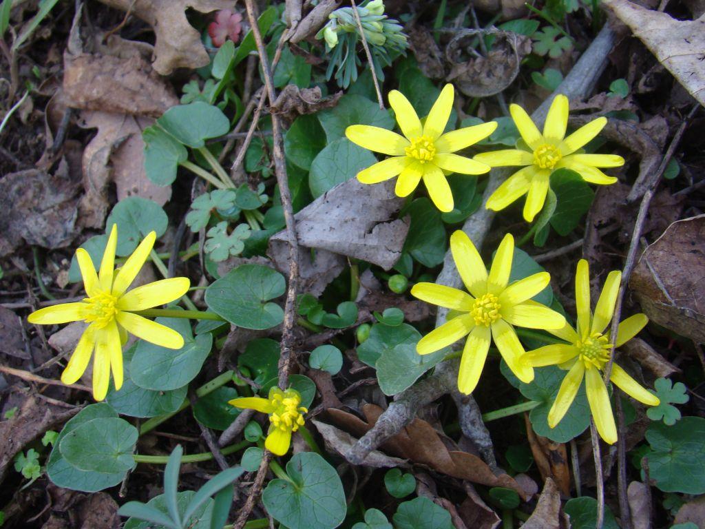 Mountainous flowers near Turtle Lake