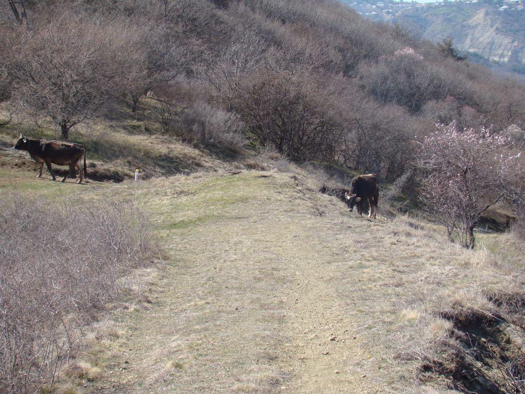 Met some cows