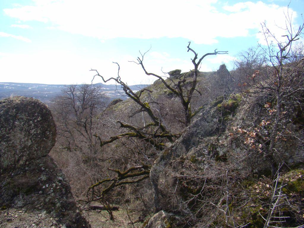 Dead tree at Birtvisi Canyon