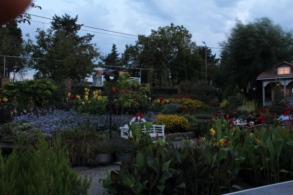 Plants at Gardenia Shevernadze