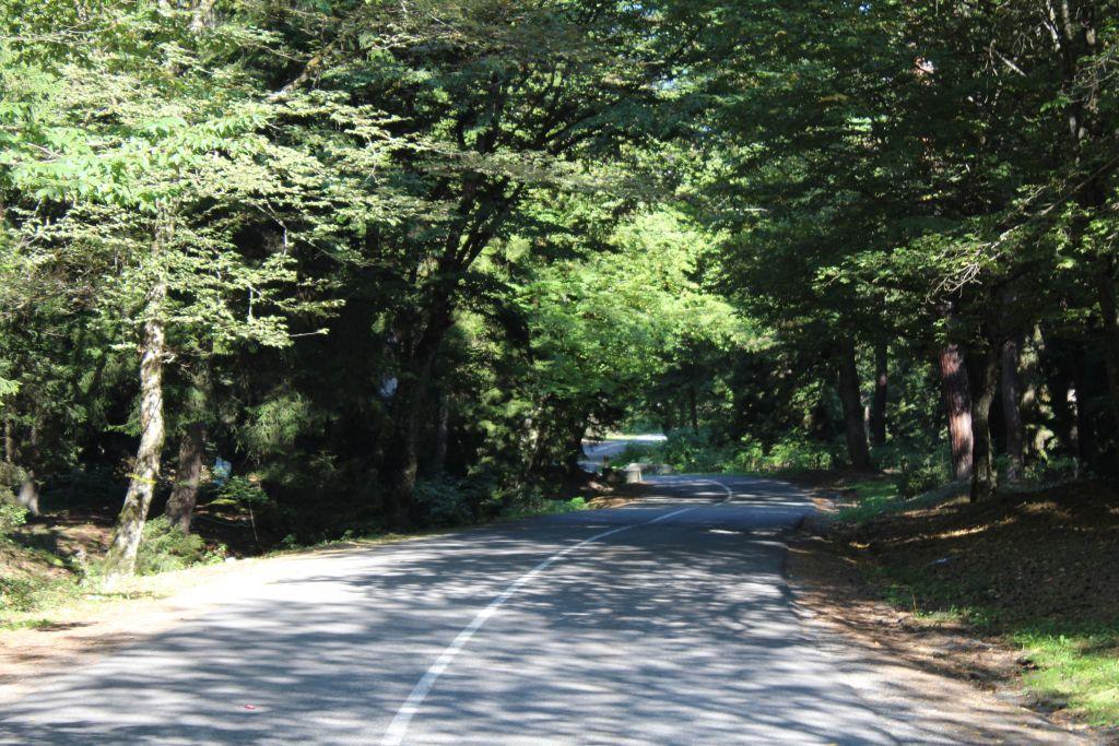 Mountainous road in Borjomi