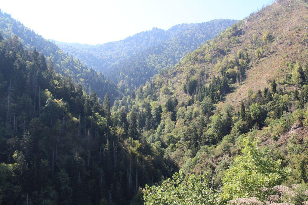 Borjomi Gorge