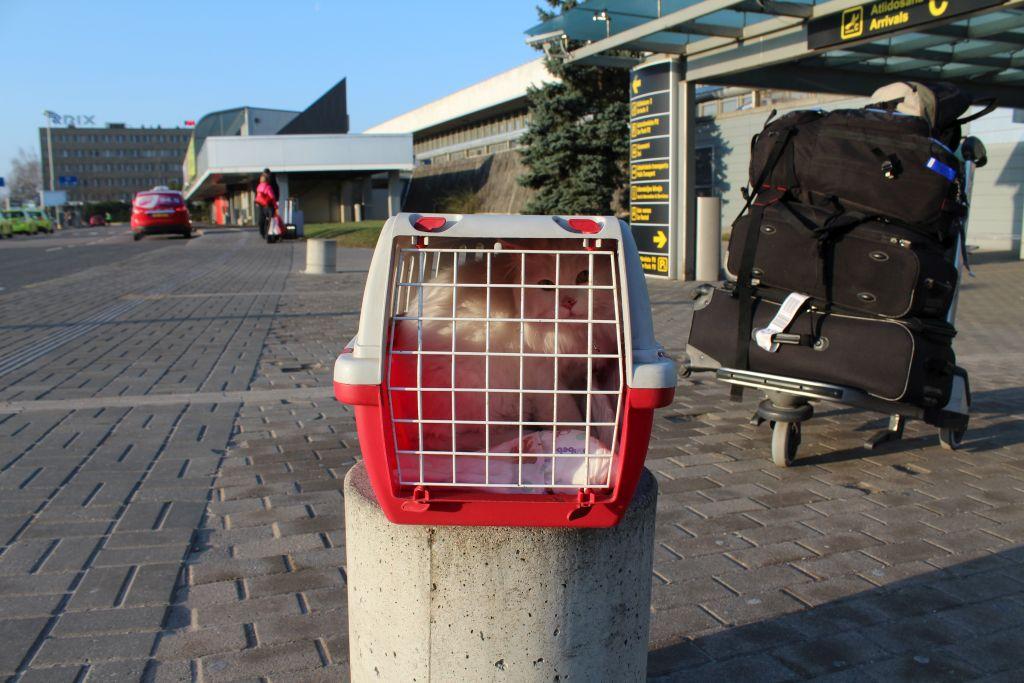 Cat just landed at Riga airport