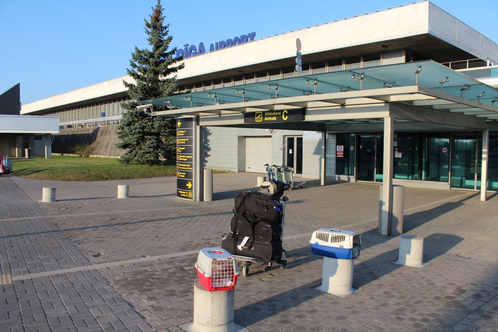 Two cats just landed at Tbilisi airport