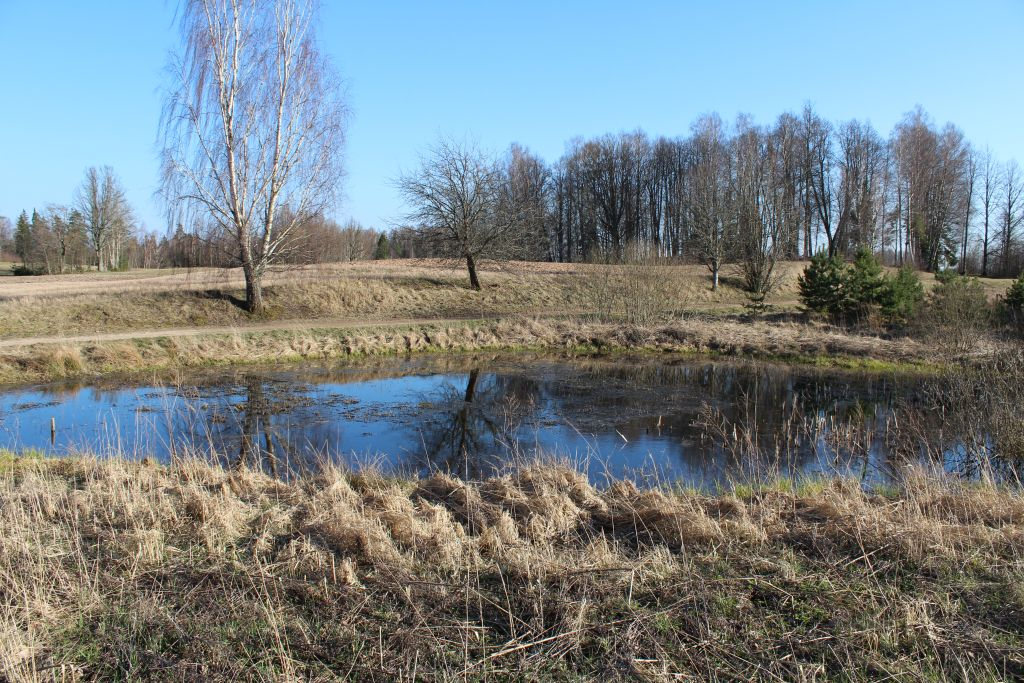 A small fish pond near house