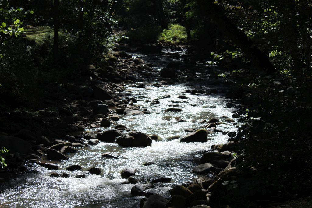 Borjomula river in park