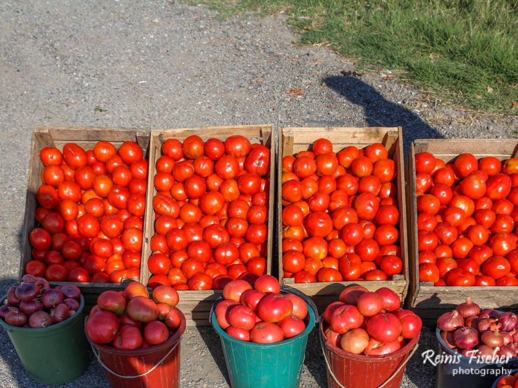 Tomatoes for sale near Gori highway in Republic of Georgia