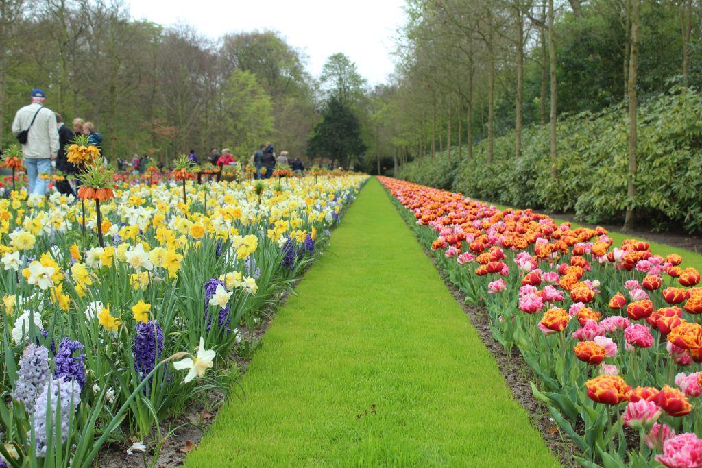 Tulips and other flowers at Keukenhof garden