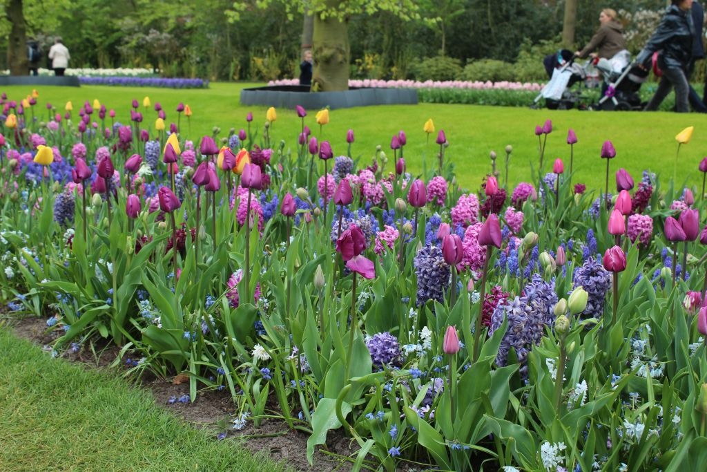 Tulips and other flowers
