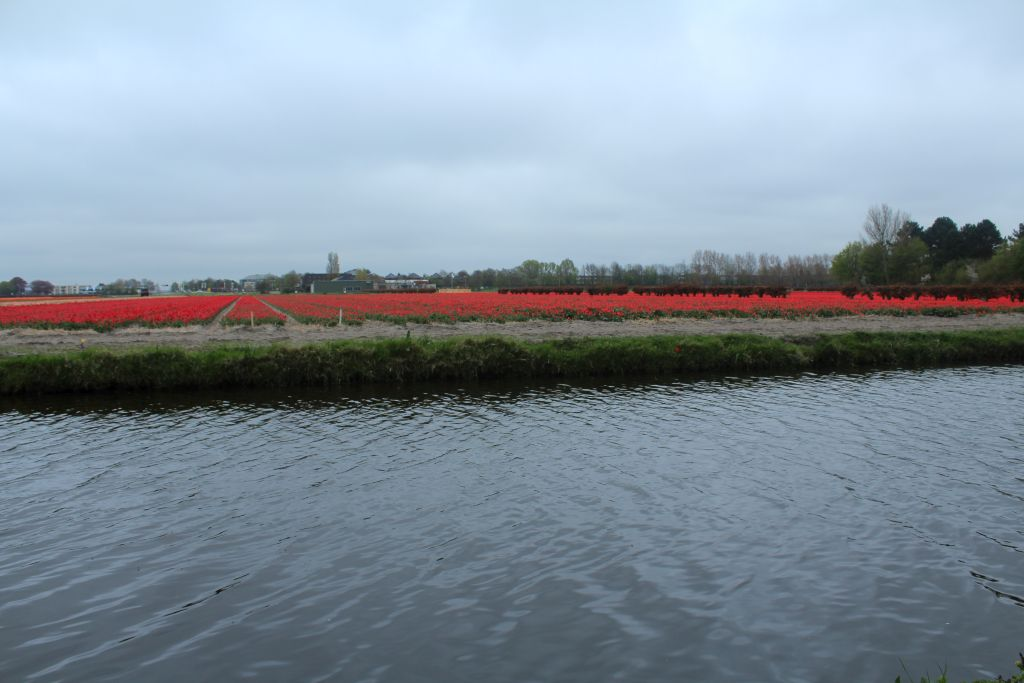 Channel and a tulip field