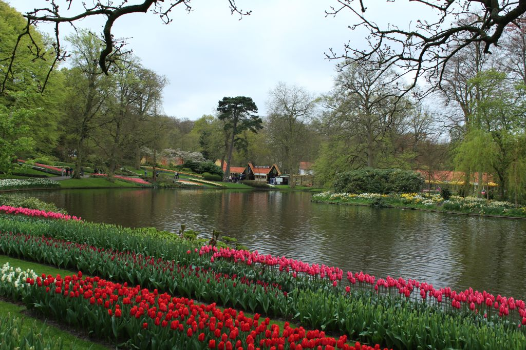 Tulips and a channel