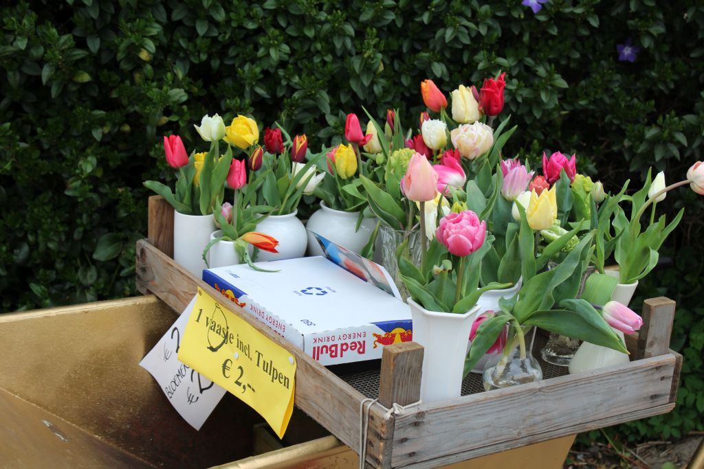 Tulip with a vase for sale