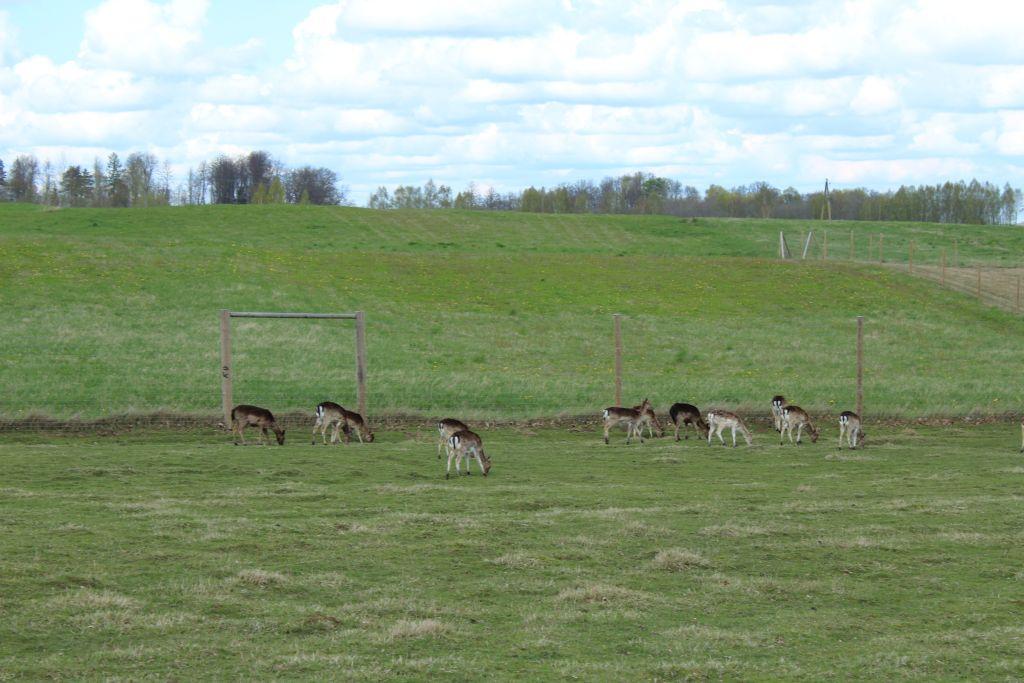 Deers at Berghof
