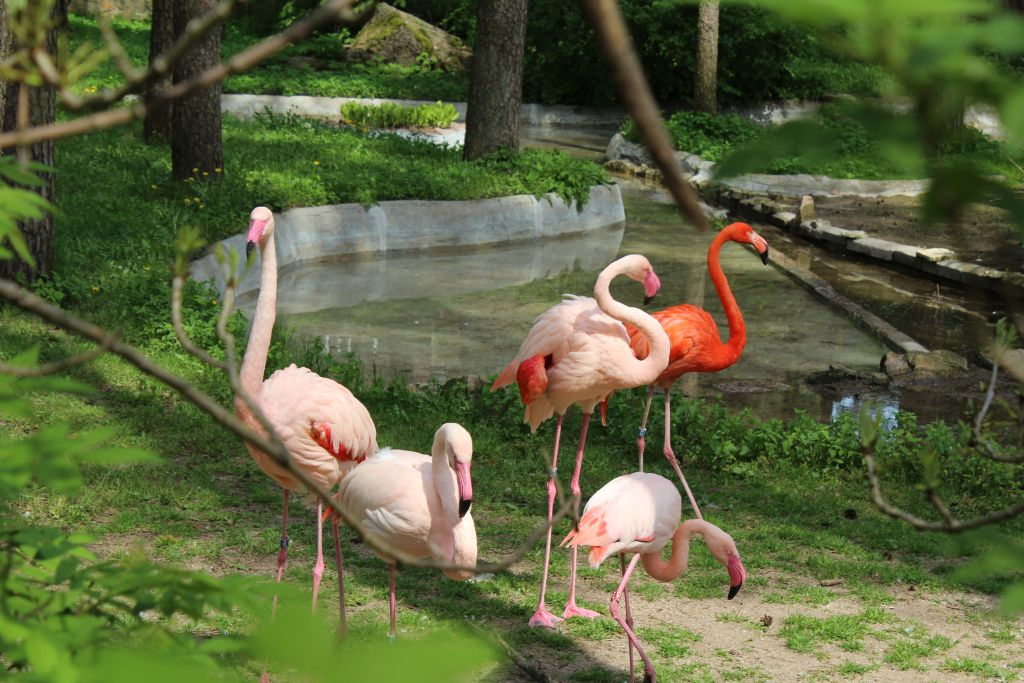 Flamingos at Riga Zoo