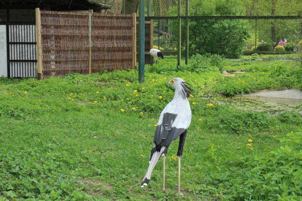 Secretary-bird at Riga Zoo