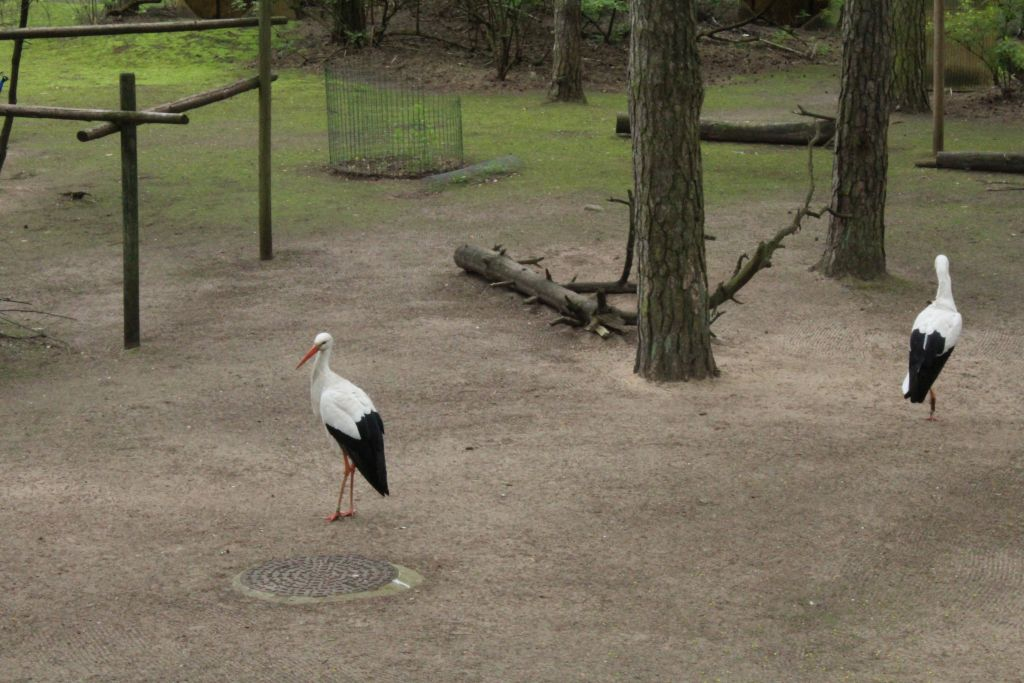 Storks at the zoo