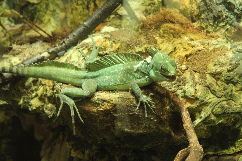 Lizard at Riga zoo