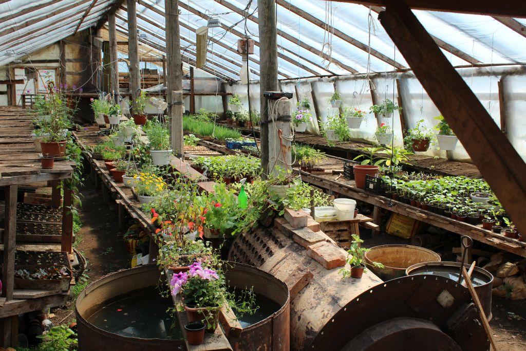 Greenhouse for seedlings