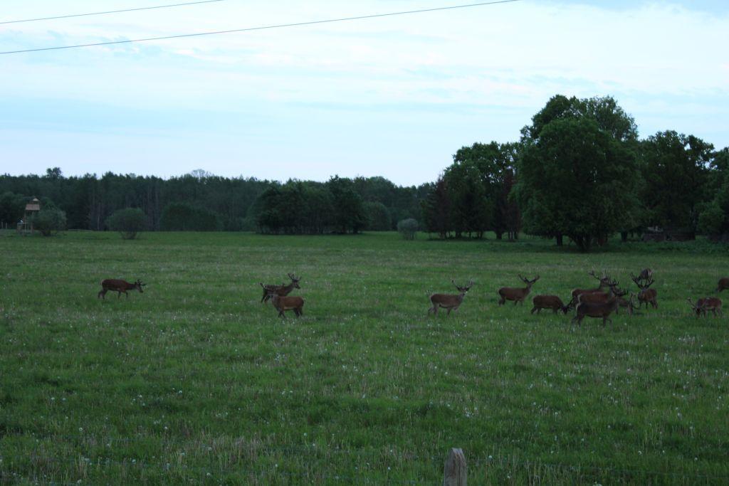 Deer park in Latvia