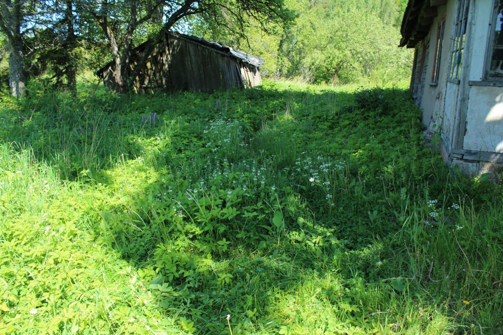 Home front overgrown with grass