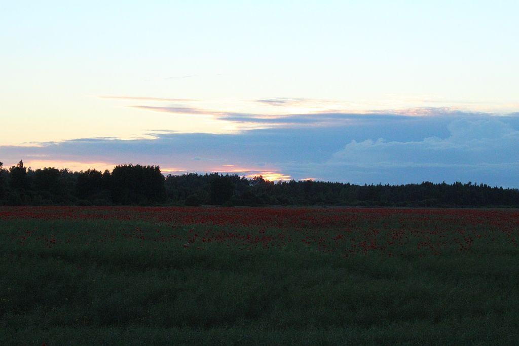 Poppy field near Viesāti