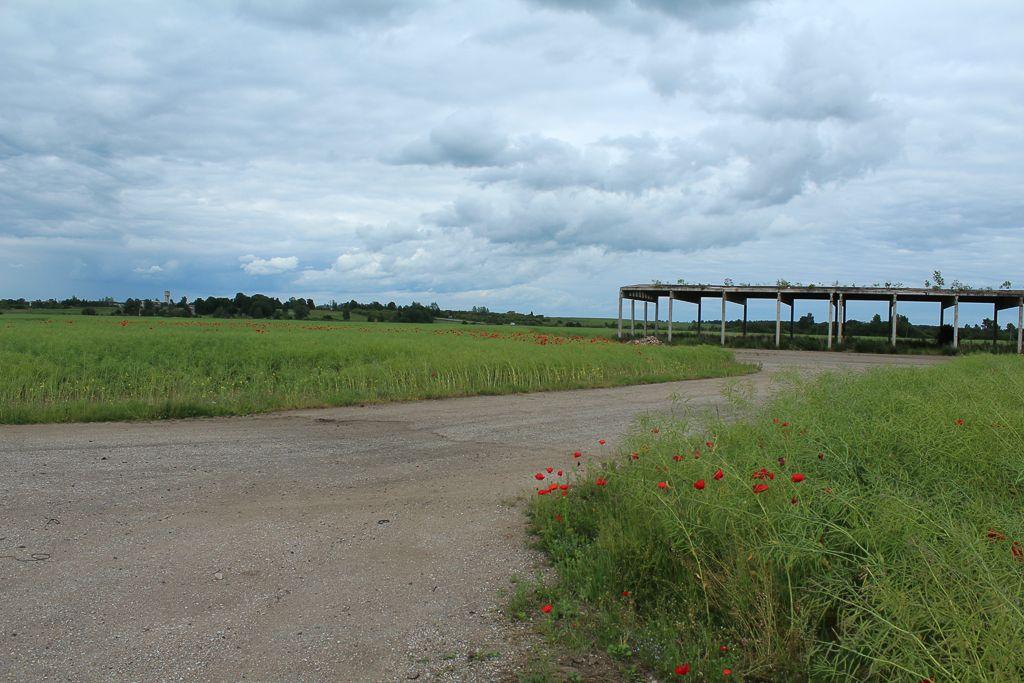 Airfield in middle of poppy fields
