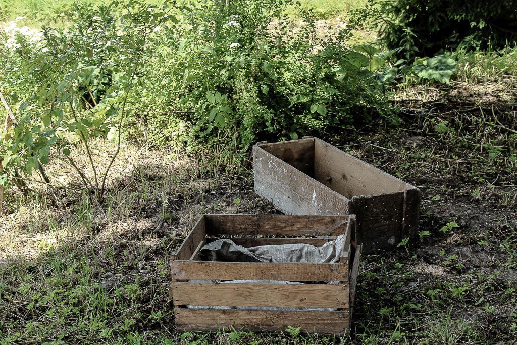Old Wooden boxes reused for veggie garden