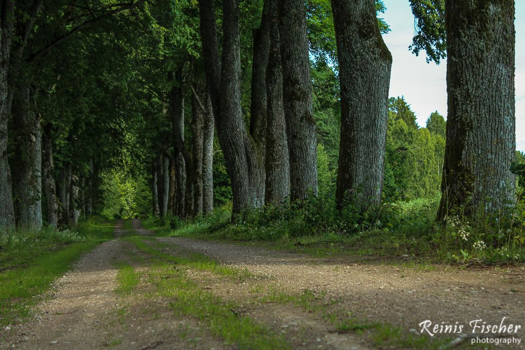 Ancient trees alley