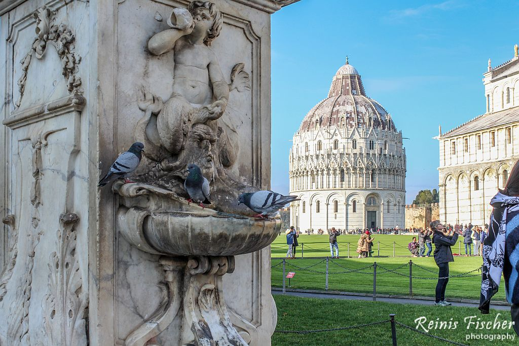 Pigeons at Pisa