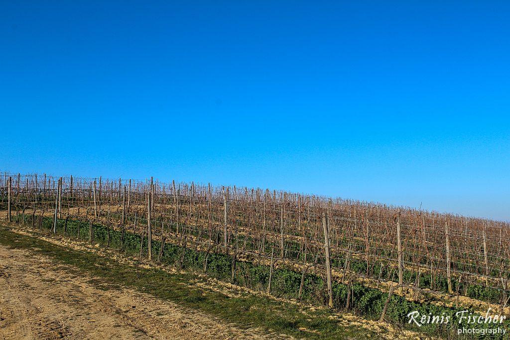 Vineyards in Winter in Tuscany, Italy