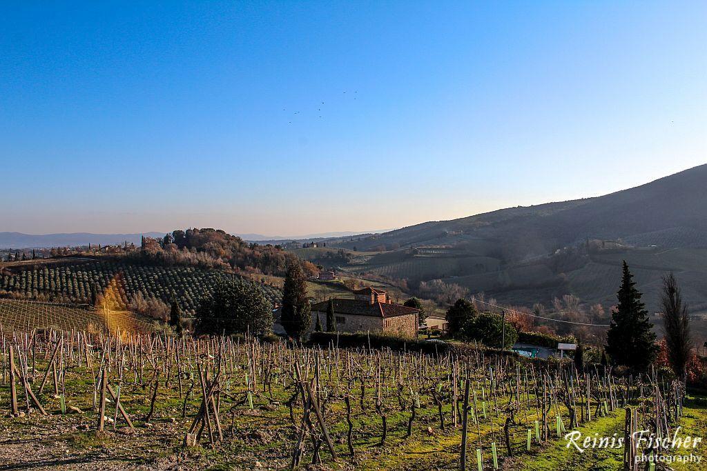 Vineyards in Tuscany region