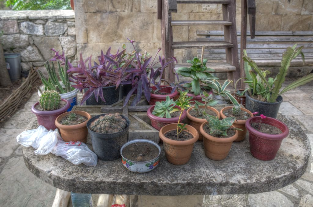 Plants at Motsameta monastery
