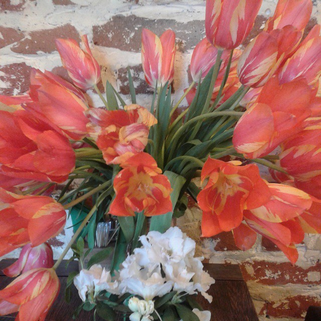 Tulips at Cafe Discovery